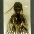 hairy_gang_x_5-szorzemeny_light-box_25x20x18cm